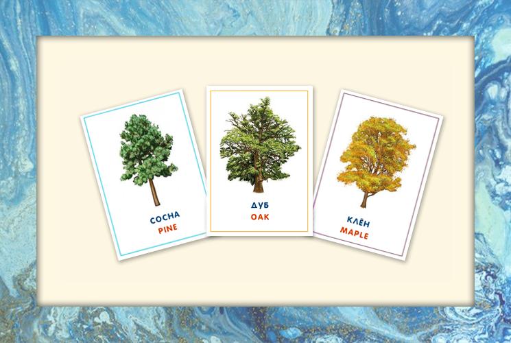 """Обучающие карточки """"Деревья"""""""